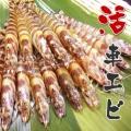 沖縄の車海老