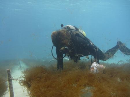 フコイダンがいっぱい入ってる沖縄のもずく