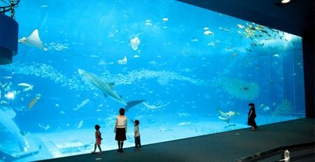 ちゅら海水族館のアクリルパネル
